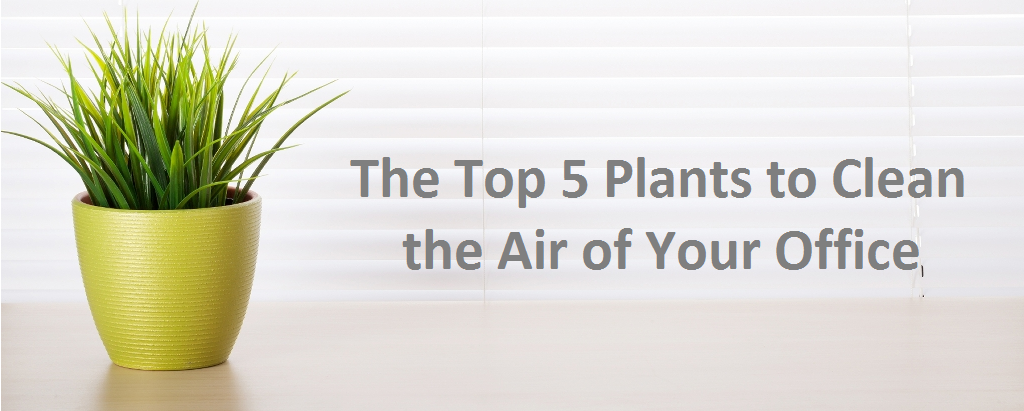 The Top 5 Plants to Clean the Air of Your Office